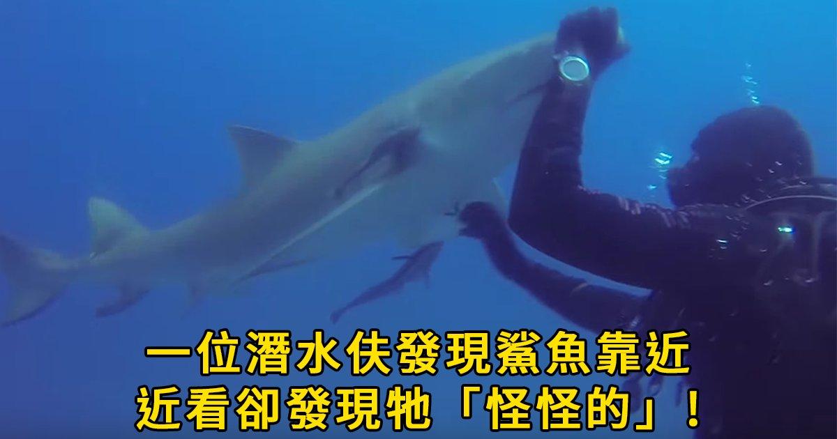 e69caae591bde5908d2 1 1.png?resize=648,365 - 潛水驚見鯊魚靠近,沒想到竟是「為了求救」? 網友:是誰放了洋蔥!