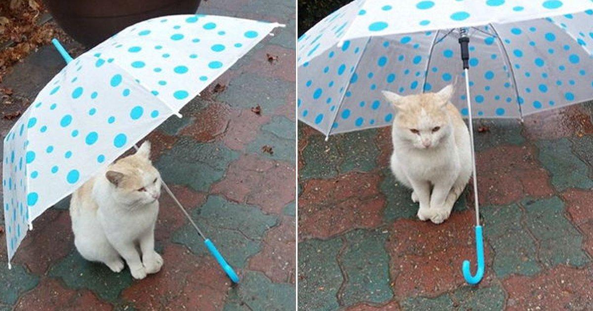 ebacb4eca09c 2 ebb3b5ec82ac.jpg?resize=300,169 - 비가 쏟아지던 날, 우산을 씌워준 사진으로 유명한 고양이의 근황