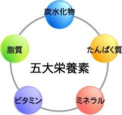 五大栄養素에 대한 이미지 검색결과