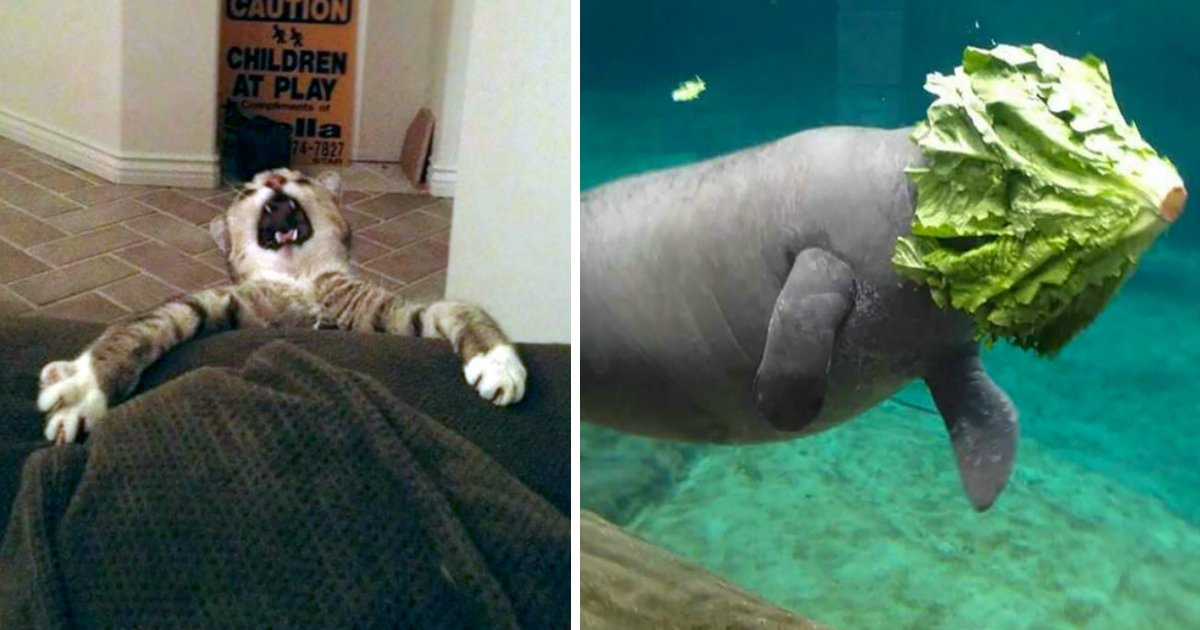 fail.jpg?resize=1200,630 - 16 Hilarious Animal Fails That Will Make You Feel Guilty For Laughing