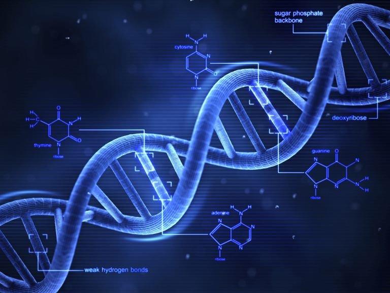DNA에 대한 이미지 검색결과
