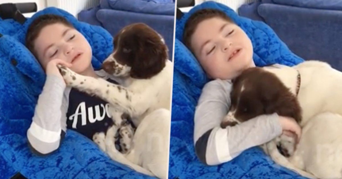 featured image 13.jpg?resize=412,232 - Mom Bought Puppy For Disabled Son And Now They Are The Best Of Friends