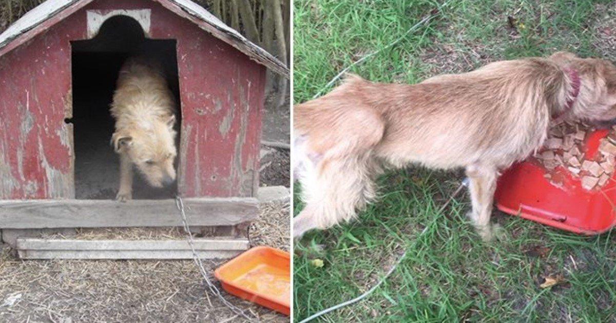 featured image 26.jpg?resize=412,232 - Un chien enchaîné à une niche pendant plus de 5 ans trouve enfin un nouveau foyer aimant