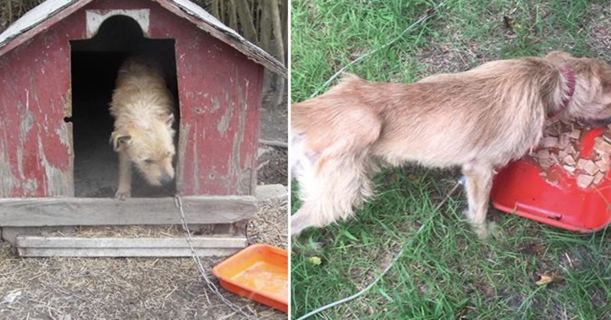 featured image 26.jpg?resize=636,358 - Poor Pup Chained To Dog House For Over 5 Years Finally Finds A New Loving Home