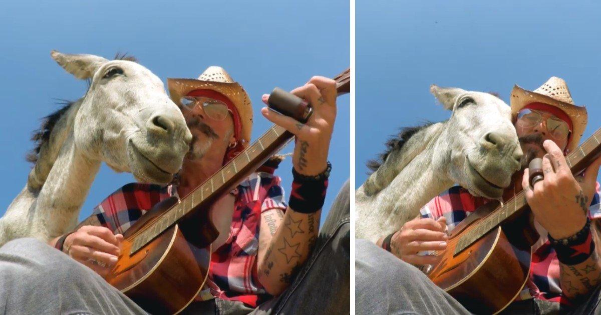 featured image 31.jpg?resize=1200,630 - Un beau moment de complicité entre un musicien et un âne