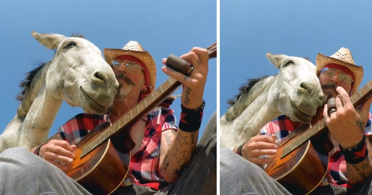 featured image 31.jpg?resize=412,232 - Heartwarming Moment When Rescue Donkey Smiles And Rests Her Head On Guitarist As He Plays Music For Her