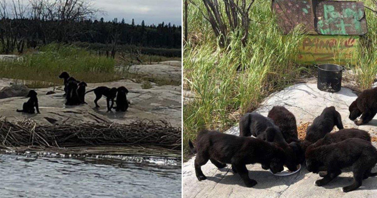 featured image 74.jpg?resize=300,169 - Homem ouve gritos do outro lado do lago e encontra 7 filhotes famintos abandonados
