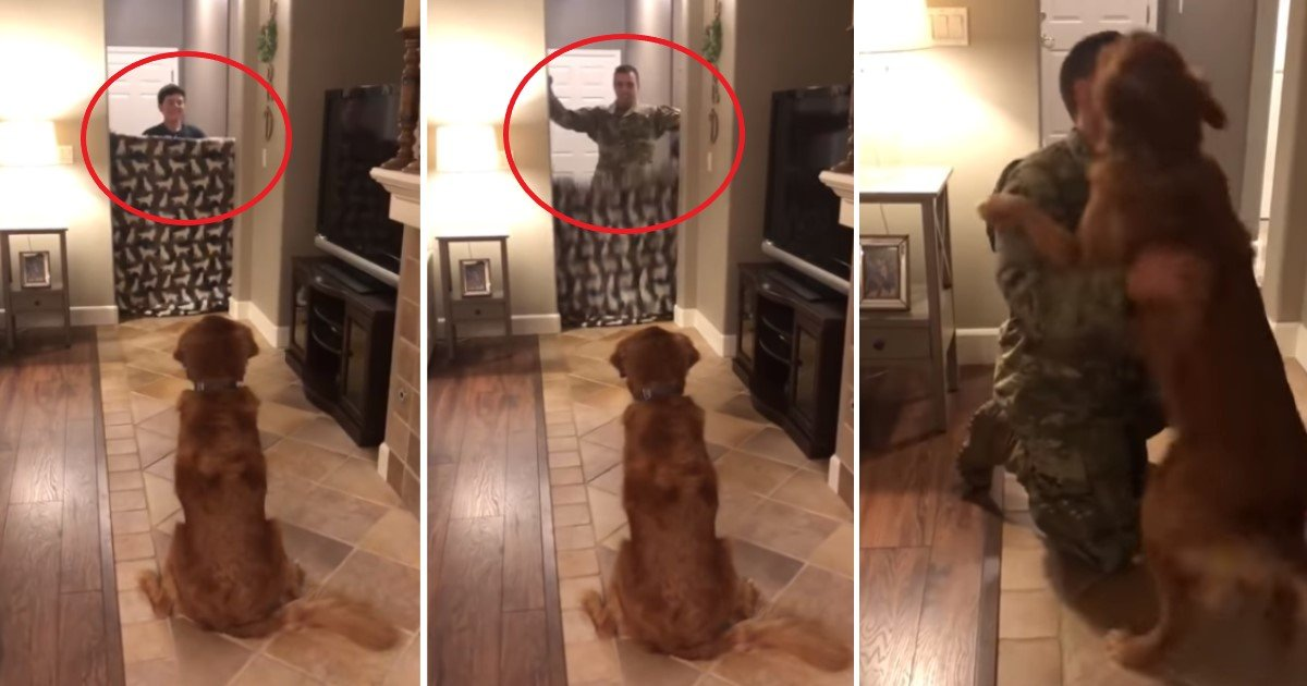 featured image 80.jpg?resize=412,232 - Dog's Reaction To Soldier Owner Returning Home Is Recorded In The Best Ever 'What The Fluff' Challenge