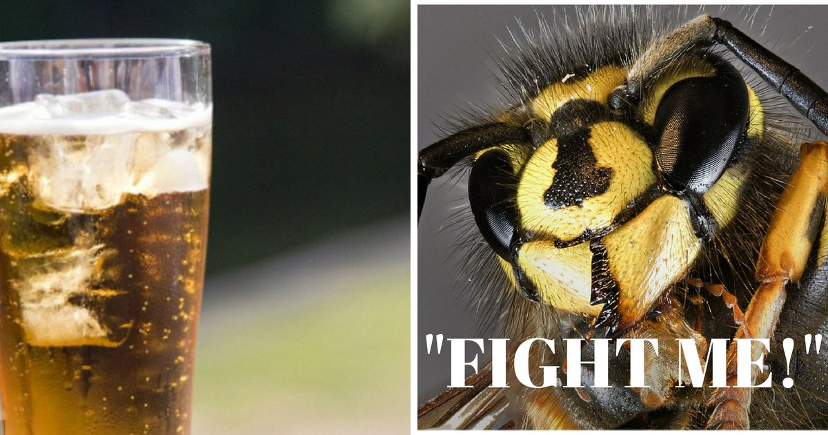 fight me .png?resize=648,365 - Britain Is Under Attack By 'DRUNK and IRRITABLE' Wasps That Are Drinking Cider In Pub Gardens