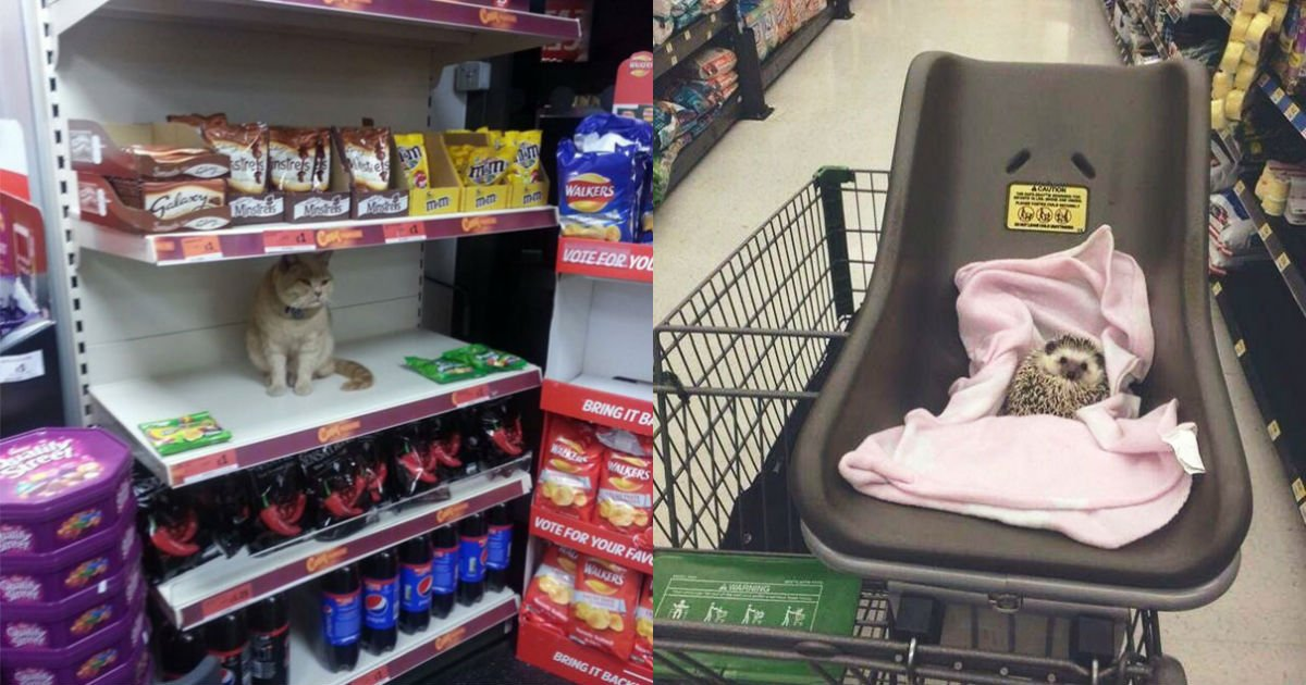 funny supermarket people 123 5b5ec79d04750  605.jpg?resize=648,365 - 눈을 의심하게 하는 '슈퍼마켓' 흔한 일상 사진 20장