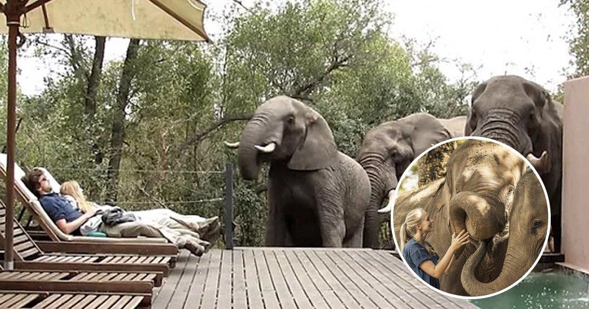 gagaaaa.jpg?resize=636,358 - 일광욕 중 야생 코끼리가 들어오자 두려움에 '얼어버린' 관광객들 (영상)