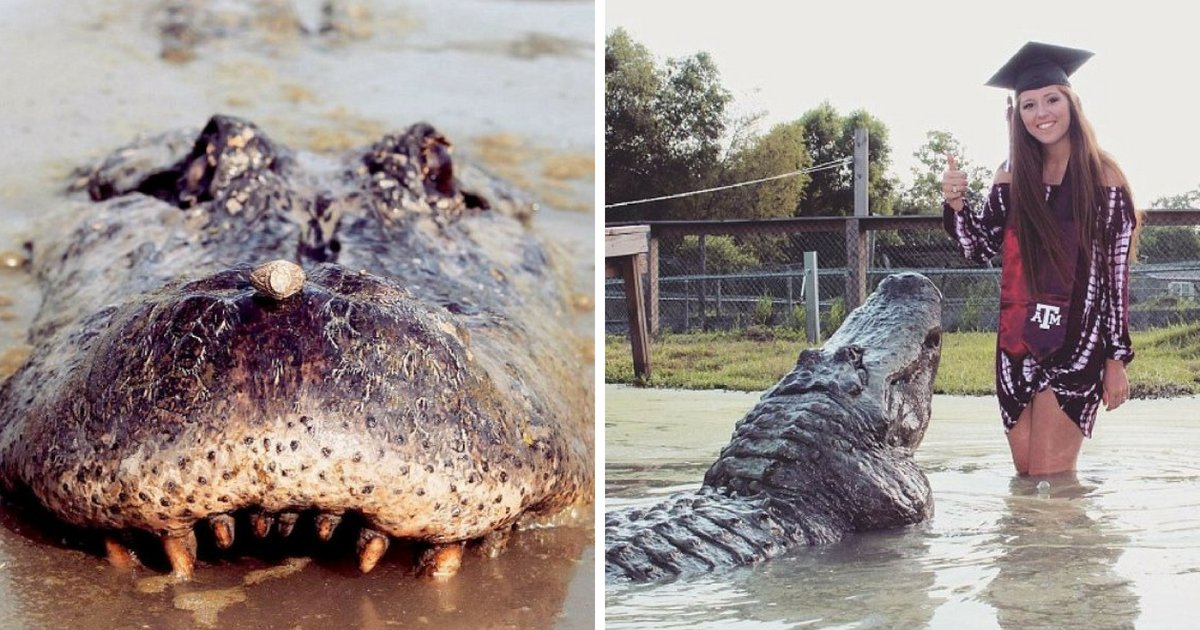 gator5.png?resize=412,232 - 21-Year-Old Senior Posed With Best Friend 14-Foot Alligator For Graduation Photo Shoot
