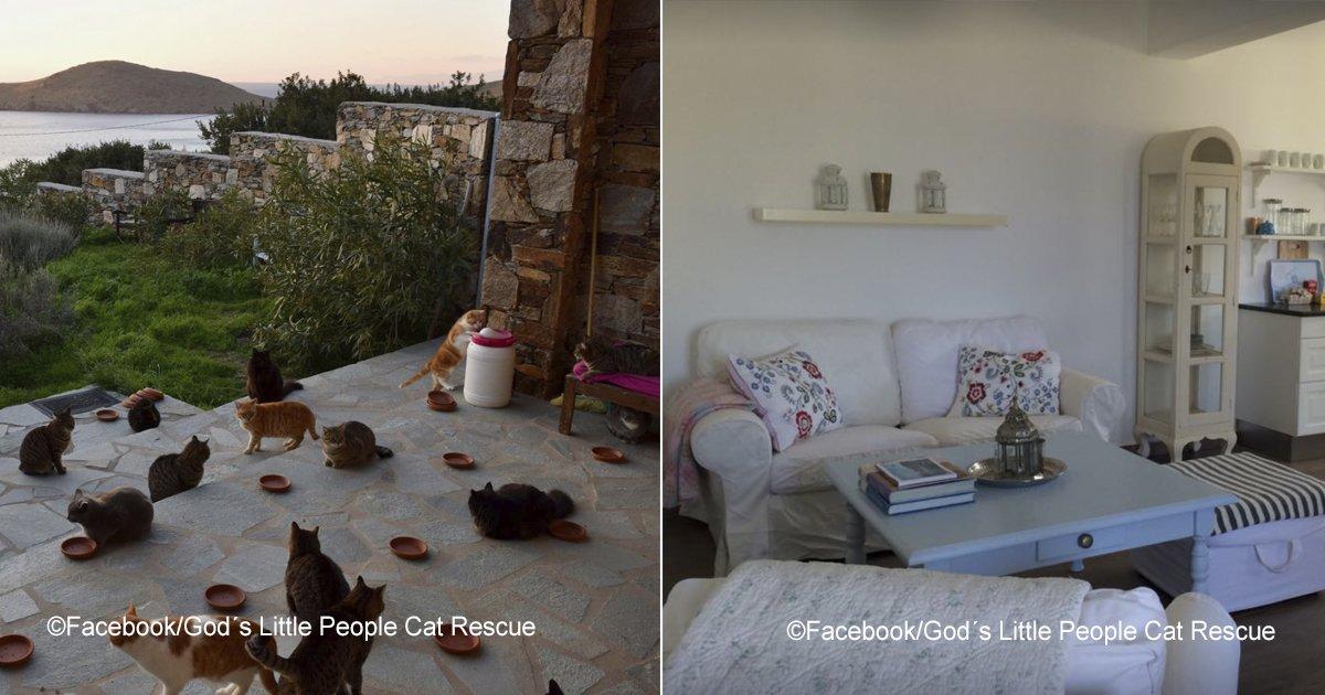gatos.jpg?resize=300,169 - Oferta de empleo fantástica, consiste en cuidar 55 gatos en una isla griega, con casa y sueldo incluidos