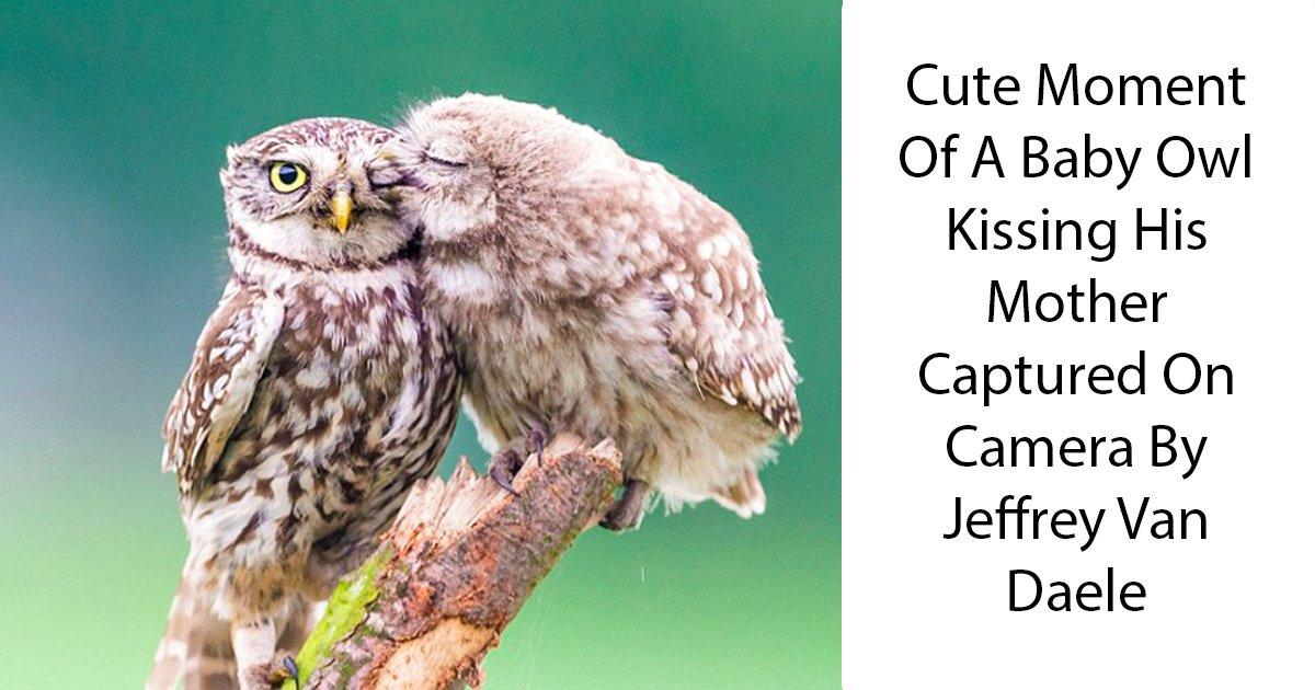 gdgd.jpg?resize=1200,630 - La photo trop mignonne d'un bébé hibou embrassant sa mère