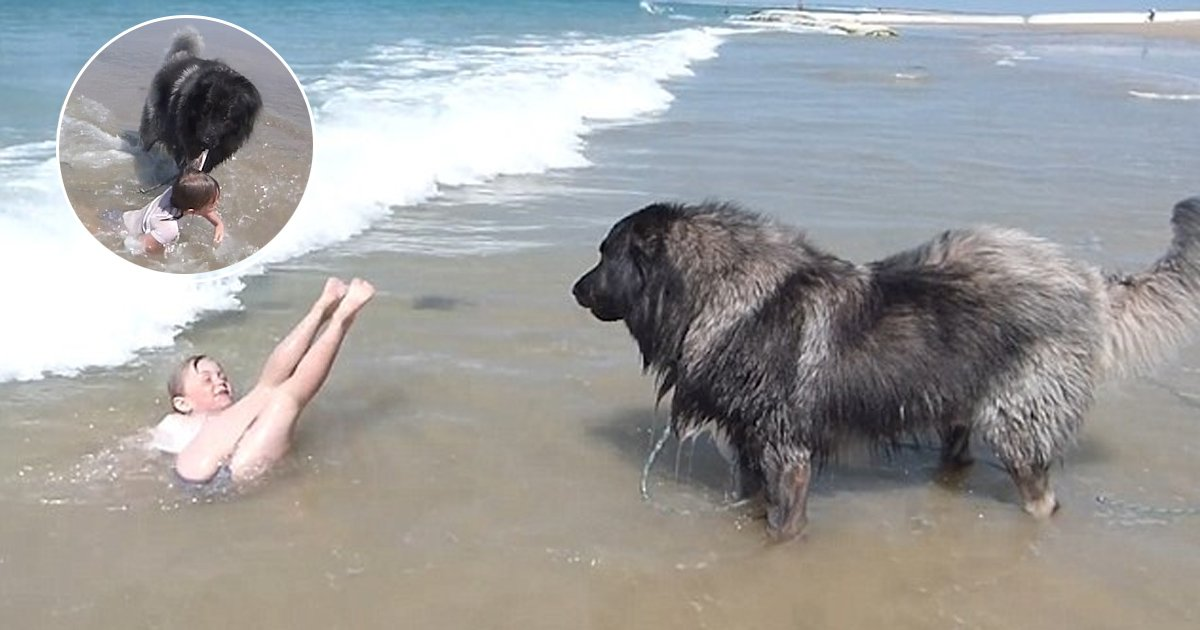 ggga.jpg?resize=636,358 - This Adorable Dog Dragged The Little Girl Out Of The Seawater To Save Her From The Waves