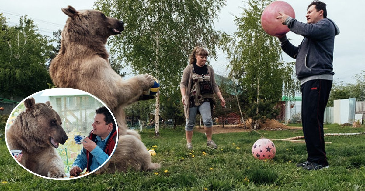 ggs.jpg?resize=636,358 - Childless Russian Couple Adopted An Orphaned Bear When He Was Only Three Months Old And 25 Years Later, He Still Lives With Them