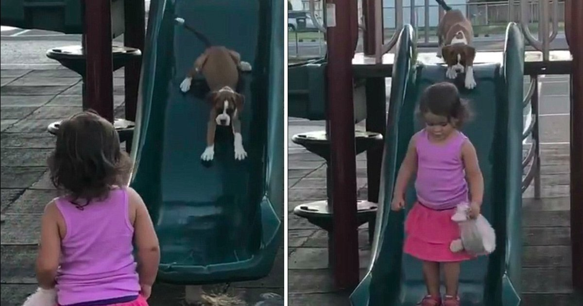 ghalghla.jpg?resize=648,365 - Adorable Video Of 2-year-old Teaching Her Boxer Pup How To Use A Slide Will Melt Your Heart