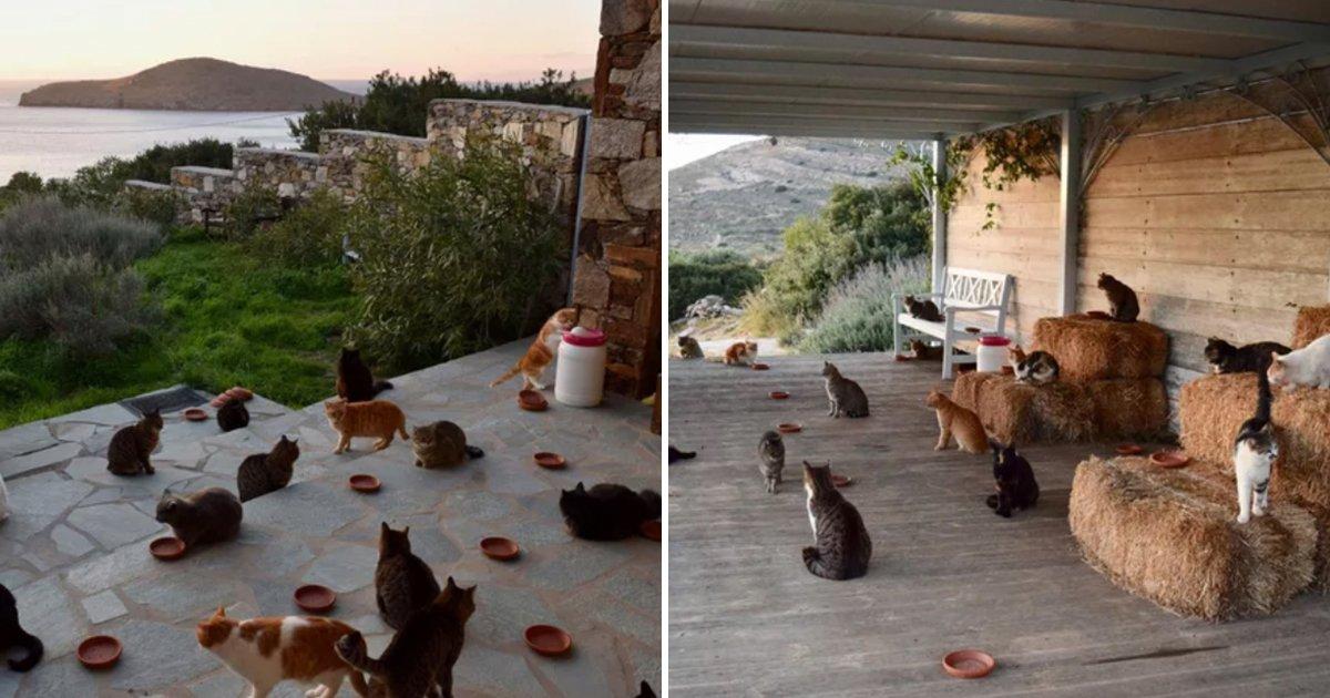 gtatos.jpg?resize=1200,630 - Uma vaga de trabalho para cuidar de um santuário cheio de gatos em uma ilha grega recebeu mais de 35.000 currículos