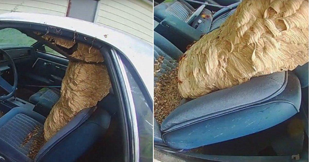 hornet nest.jpg?resize=648,365 - Un exterminateur enlève calmement un énorme nid de frelons logé dans une voiture