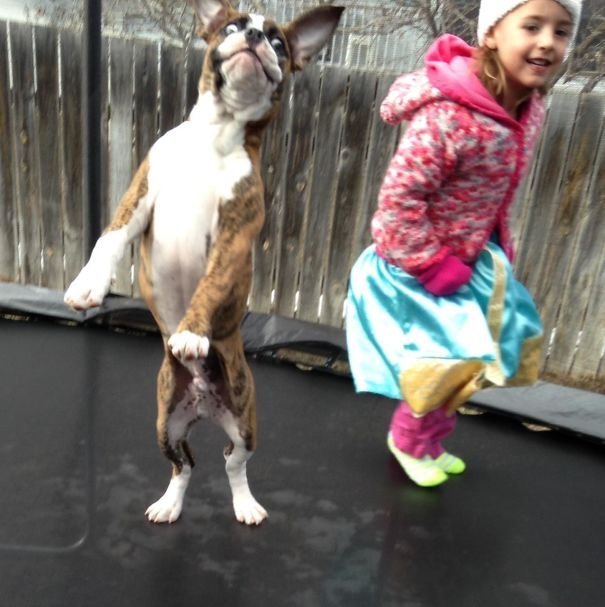 My Niece And Her Best Friend Got A Trampoline. I Think They Are Enjoying It