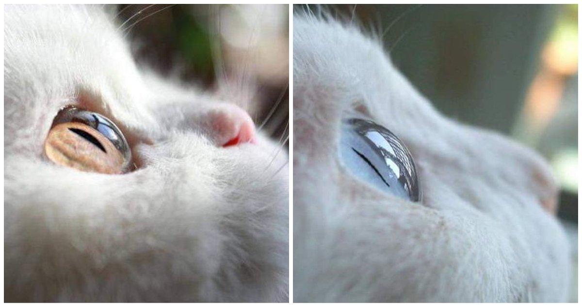 layout 2018 8 9 1.jpg?resize=648,365 - 고양이 눈동자가 '투명 구슬' 같이 영롱하게 빛나는 이유
