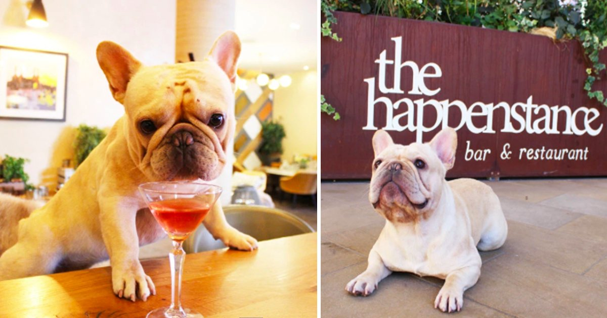 lklklk.jpg?resize=636,358 - United Kingdom To Open The First-ever Pop-up Café For French Bulldogs