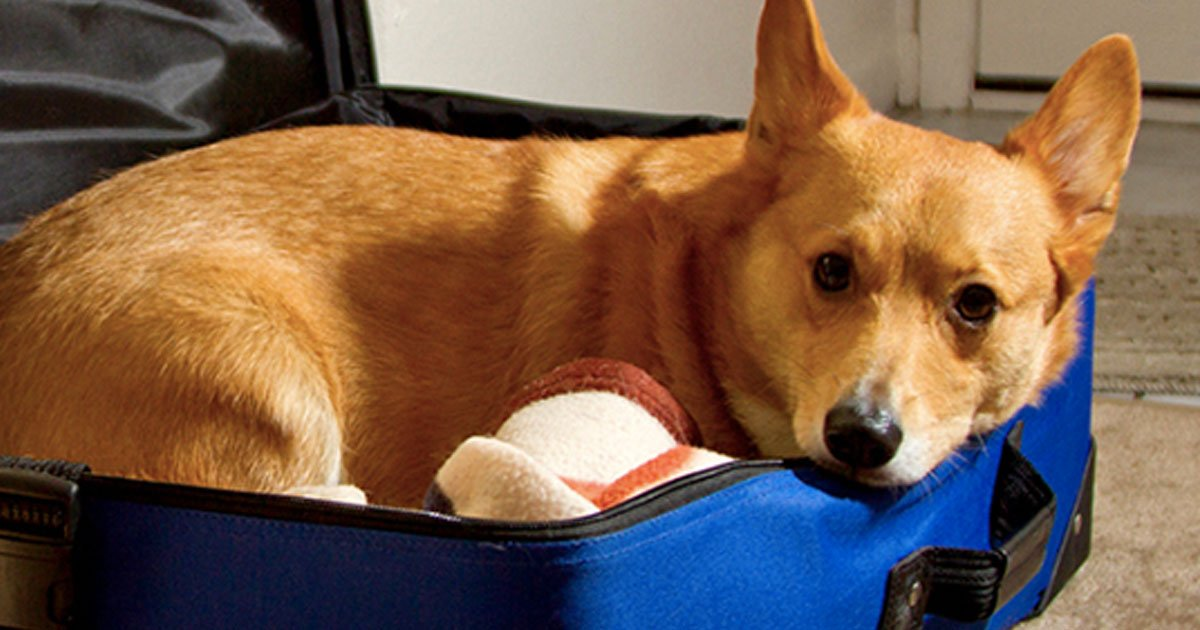 man brings dog hopital.jpg?resize=636,358 - Husband Fulfils His Wife's Last Wish By Bringing Their Dog To The Hospital In A Suitcase To Say Final Goodbye