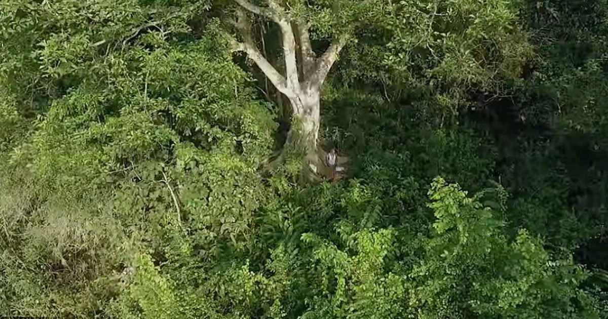 man created lush forest.jpg?resize=1200,630 - A Man Single-Handedly Created A Lush Forest That Is Now A Home To Tigers And 115 Elephants