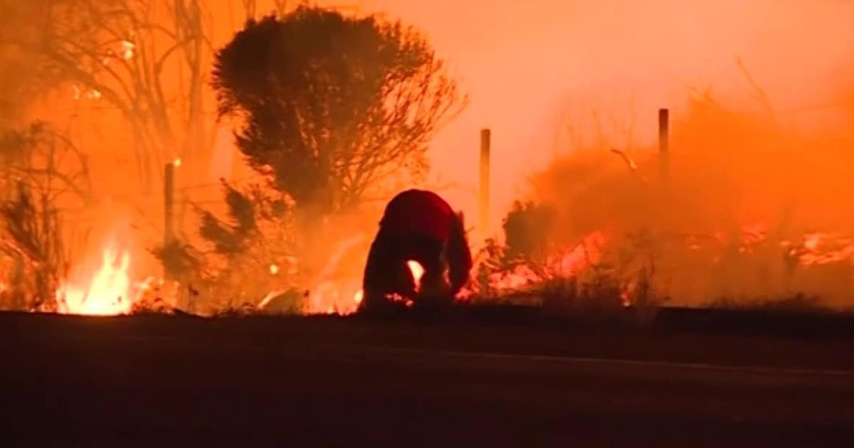 police save animals from fire.jpg?resize=636,358 - Video Footage Shows Police Rescuing Cats And Dogs From A Californian Animal Shelter From Wildfires
