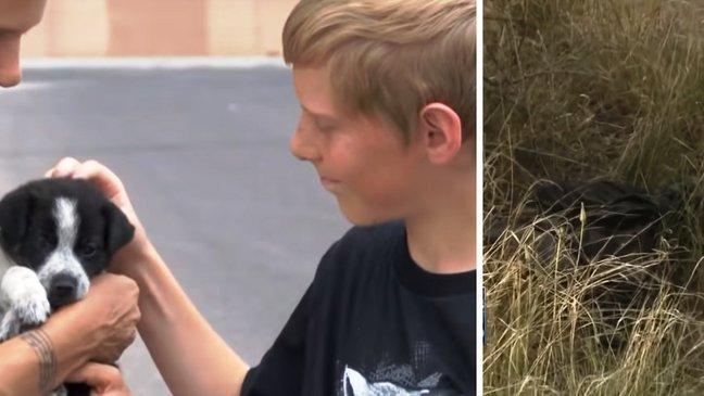 puppy4 png.jpg?resize=1200,630 - Garoto de 13 anos salva 6 filhotes de cachorro que foram jogados no lixo