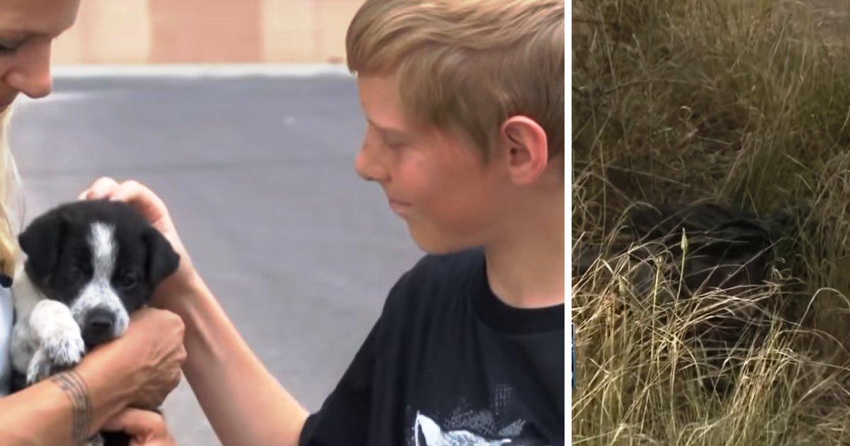 puppy4.png?resize=1200,630 - Six chiots affamés jetés dans un sac-poubelle avant d'être sauvé par un écolier de 13 ans