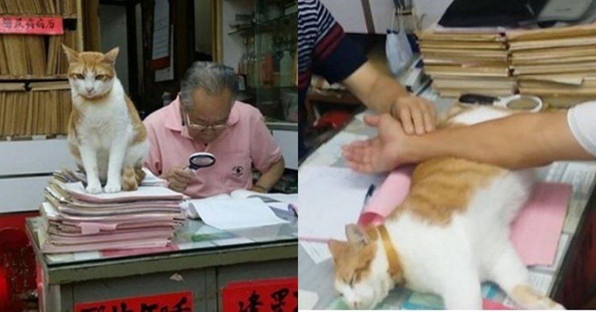 s 47.jpg?resize=300,169 - '한의사' 집사 위해 환자 맥 짚을 때마다 받침대 만들어주는 고양이