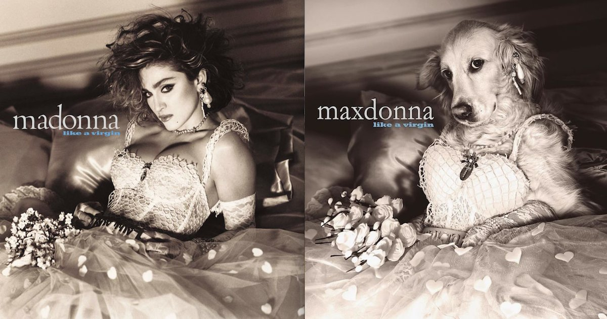screen shot 2018 08 01 at 12 20 39 pm.png?resize=1200,630 - This Dog Recreated Madonna's Iconic Photos, And The Attention To Detail Is Unbelievable