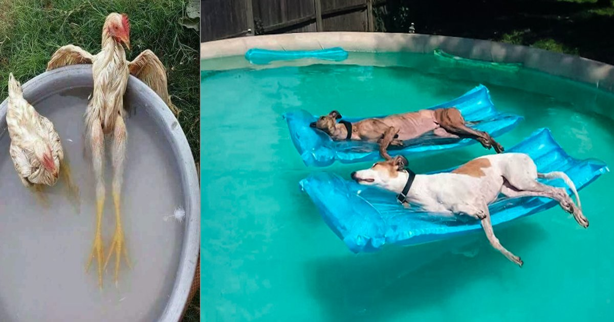 screen shot 2018 08 08 at 7 27 02 pm.png?resize=636,358 - 28 Animals That Know How to Survive Hot Summer Days