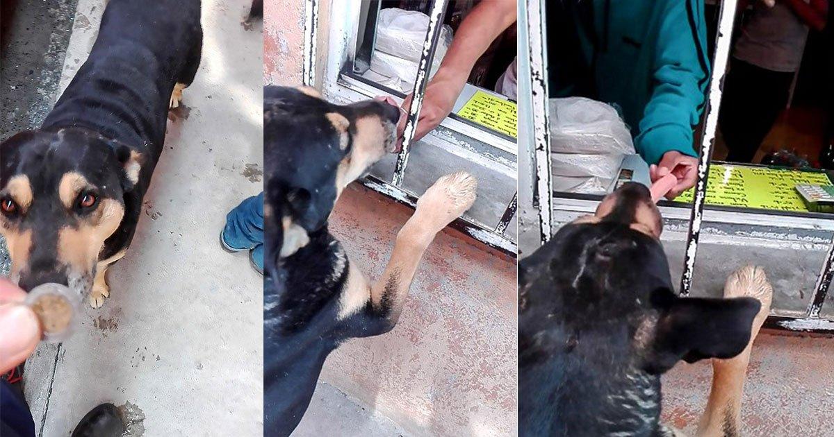 smart stray dog asks for money from passerby to buy himself a sausage.jpg?resize=412,232 - Un chien errant futé demande de la monnaie à un passant pour s'acheter une saucisse