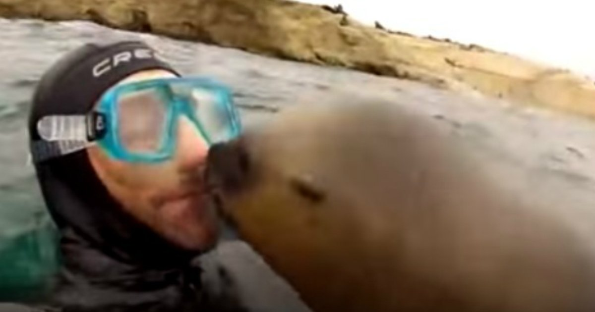 smooch.jpg?resize=636,358 - Playful Seal Gives A BIG Kiss On Snorkeler's Lips, Sweetest Interaction Ever!