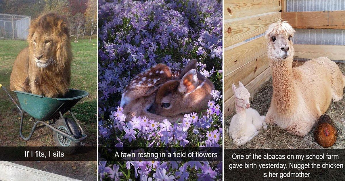 snapchat animals funny photos.jpg?resize=412,275 - 15 Funny Animal Snapchats That Make The Internet Laugh So Hard