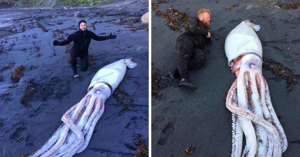 squid5.png?resize=1200,630 - Trois frères en plongée sont tombés sur un calamar géant de 4,2 mètres - ça fait beaucoup de calamars!