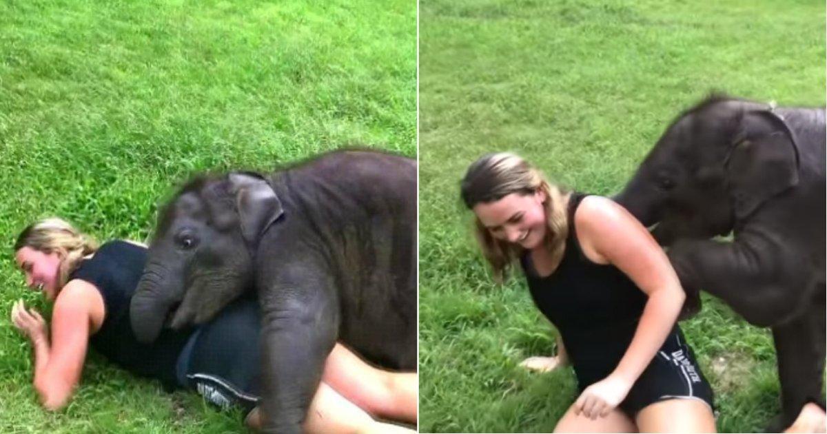 suki elephant.jpg?resize=412,232 - Bébé éléphant n'arrêtera pas de serrer dans ses bras et d'embrasser cette touriste