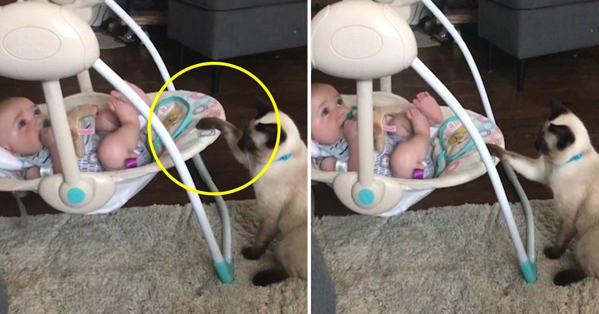tag.jpg?resize=412,232 - Un chat saisit sa chance de devenir le baby-sitter d'un petit bébé reposant dans son berceau