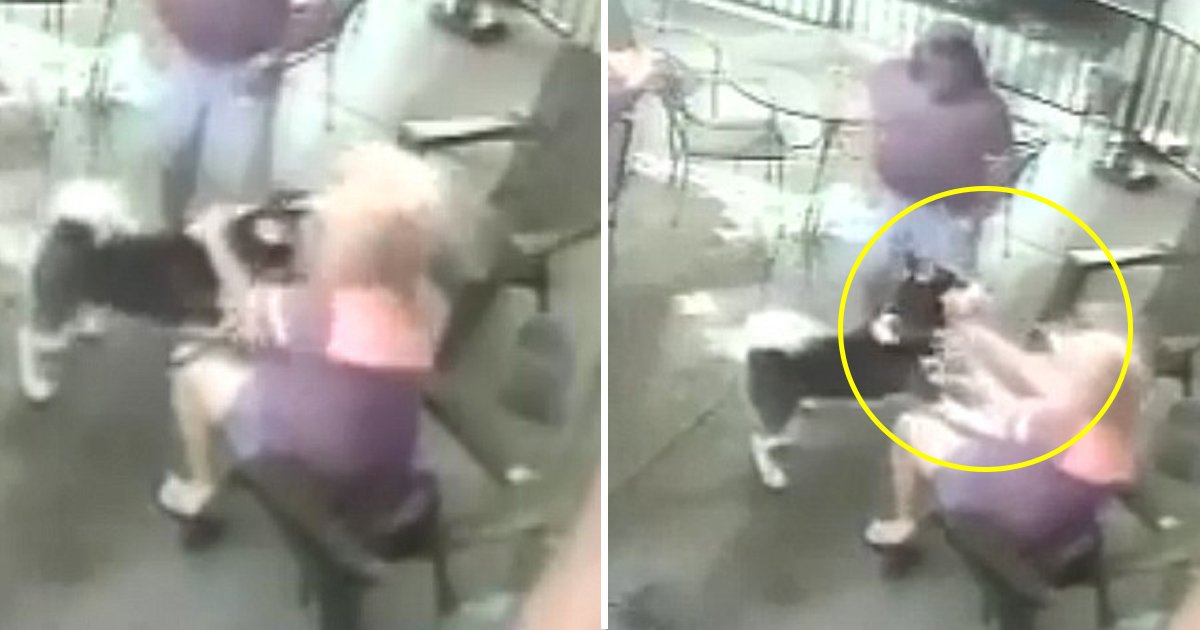 tete.jpg?resize=300,169 - [Vidéo] Mordue au visage par un chien, cette ancienne mannequin a dû subir une chirurgie réparatrice