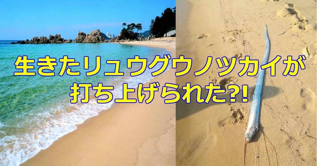 tukai.png?resize=412,232 - 福井県の海にリュウグウノツカイが目撃される!もしかして地震の予兆?