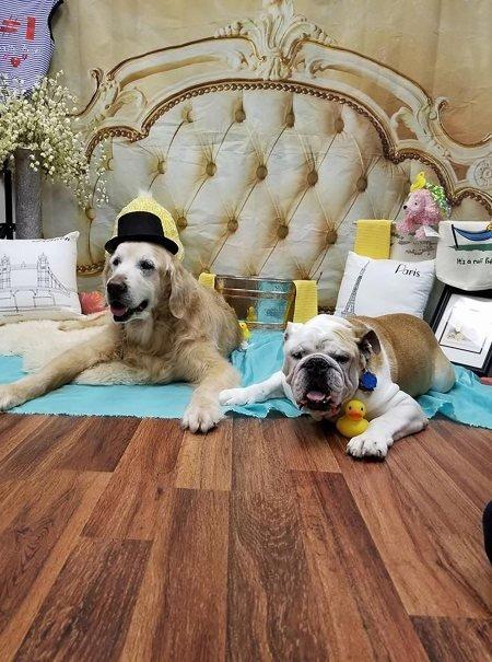 u.jpg?resize=1200,630 - Dois cachorros com doenças terminais se tornam melhores amigos