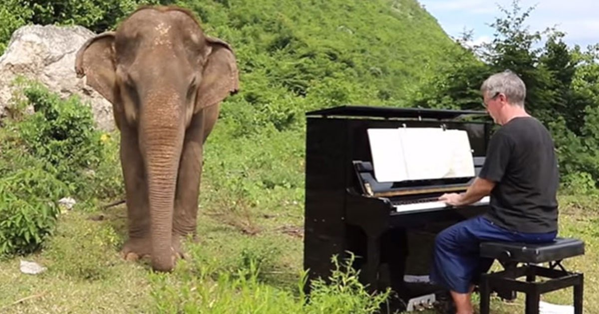untitled 1 11.jpg?resize=636,358 - The Video Of Blind Elephant Dancing Slowly As The Pianist Plays The Music Is Too Heartwarming To See