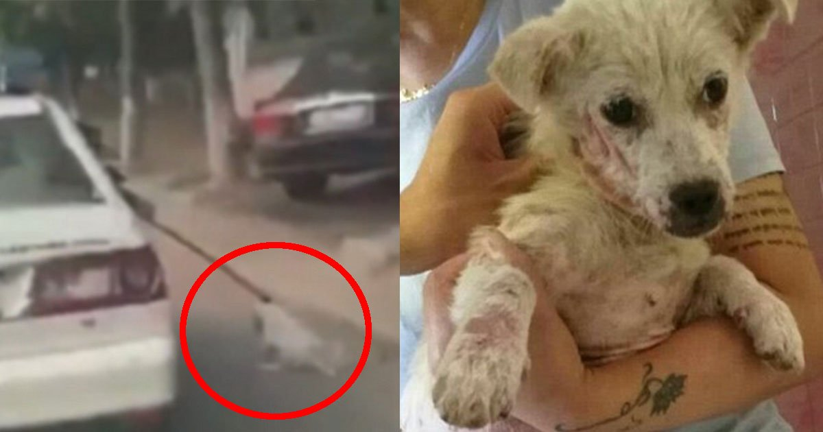 untitled 1 40.jpg?resize=648,365 - The Upsetting Footage Of Police's Car Dragging The Dog By Its Neck Along A Road Caught On Camera In Eastern China