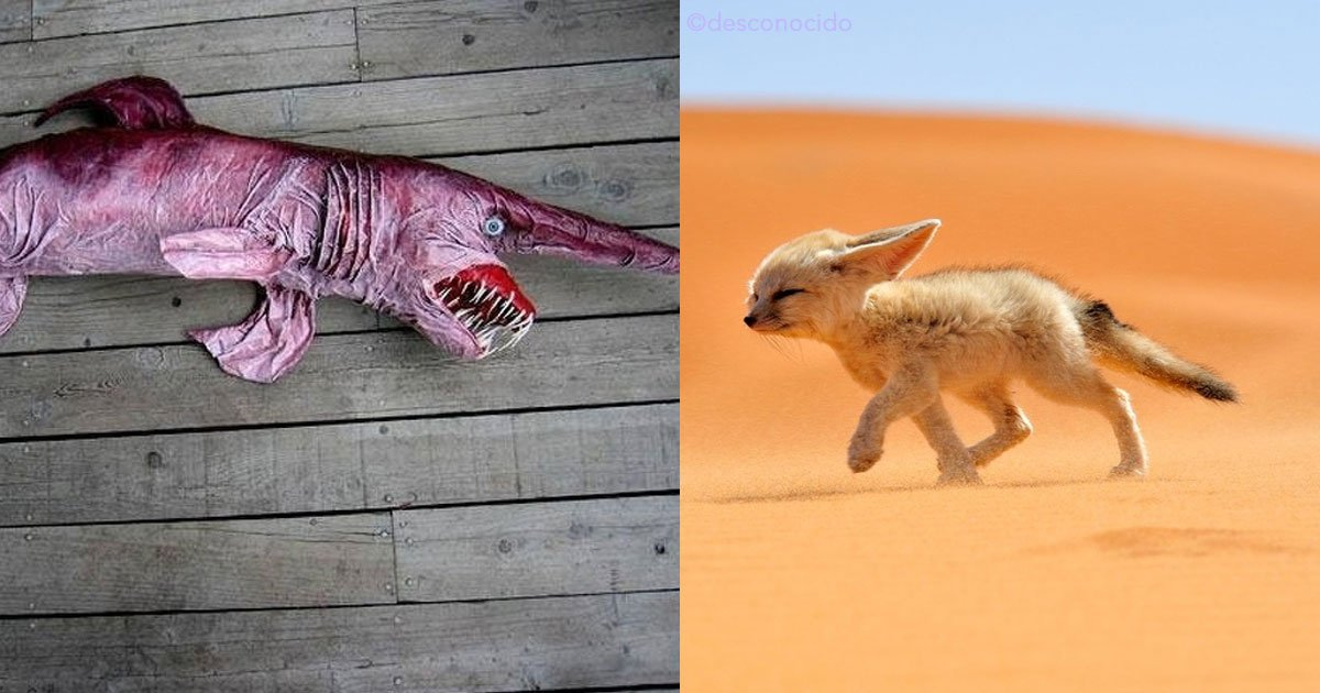 untitled 1 64.jpg?resize=300,169 - 10 animales tan extraños que parecen de una película de ciencia ficción