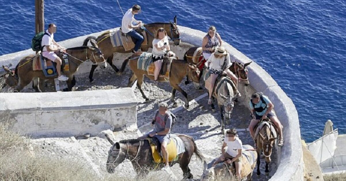 untitled design 59.png?resize=412,232 - Locals In Santorini Island Forced To Cross-Breed Donkeys To Make Them Strong Enough For Fat Tourists