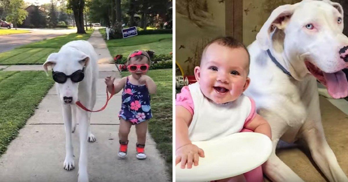 untitled design 8.png?resize=412,232 - Une famille sauve une chienne aveugle et sourde et maintenant elle veille sur leur nouveau-né