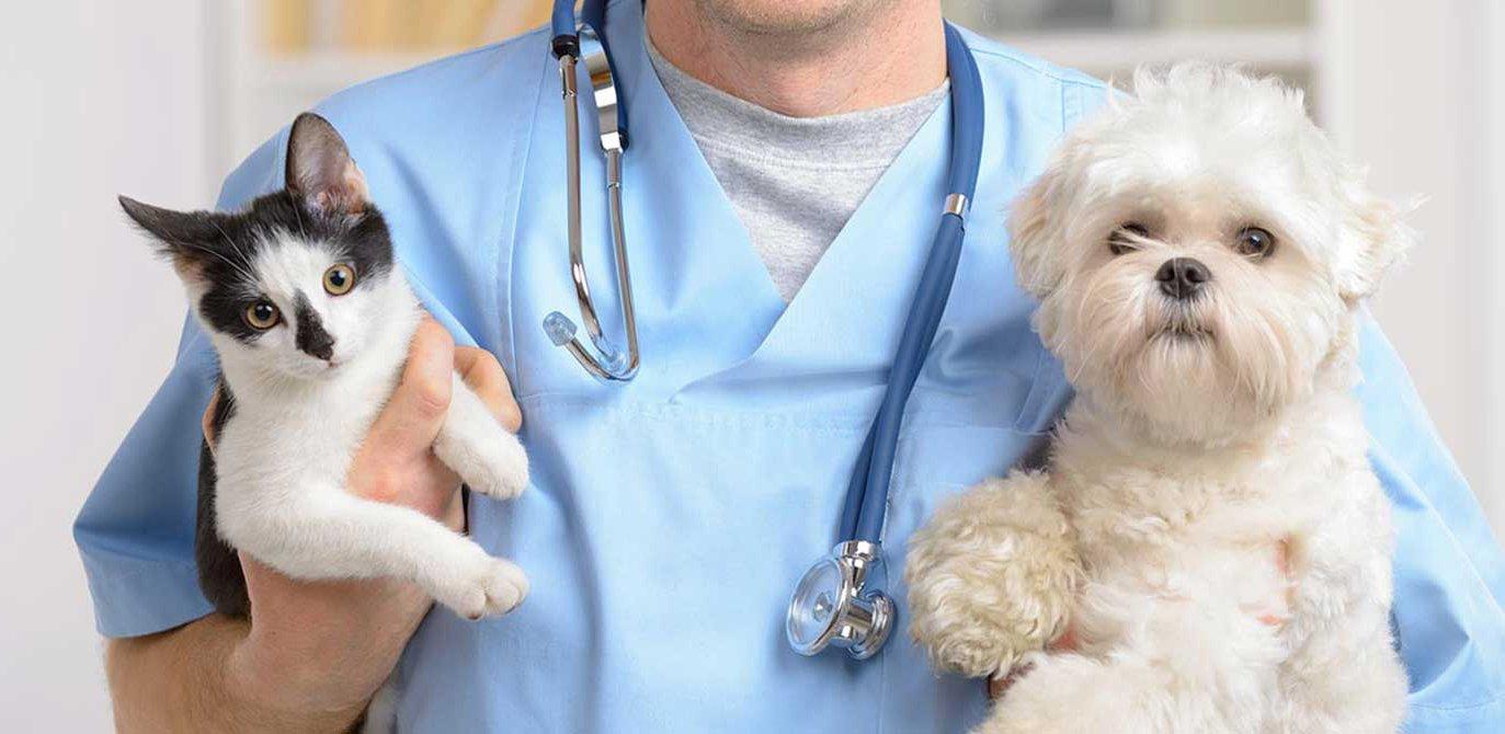 vetsliders15a 4 1.jpg?resize=300,169 - Cães e gatos podem doar sangue e salvar a vida de outros animais