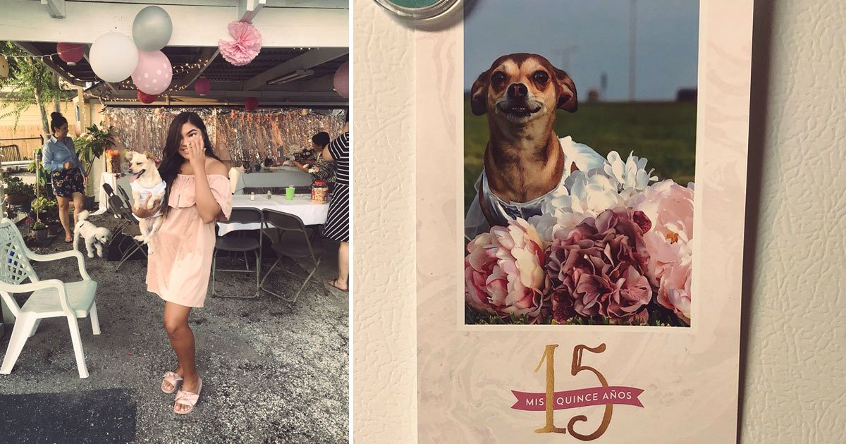 woman throw pink party for dog.jpg?resize=636,358 - Woman Dresses Her Chihuahua Up In A Princess Dress As She Throws Her A Quinceañera For Her Birthday